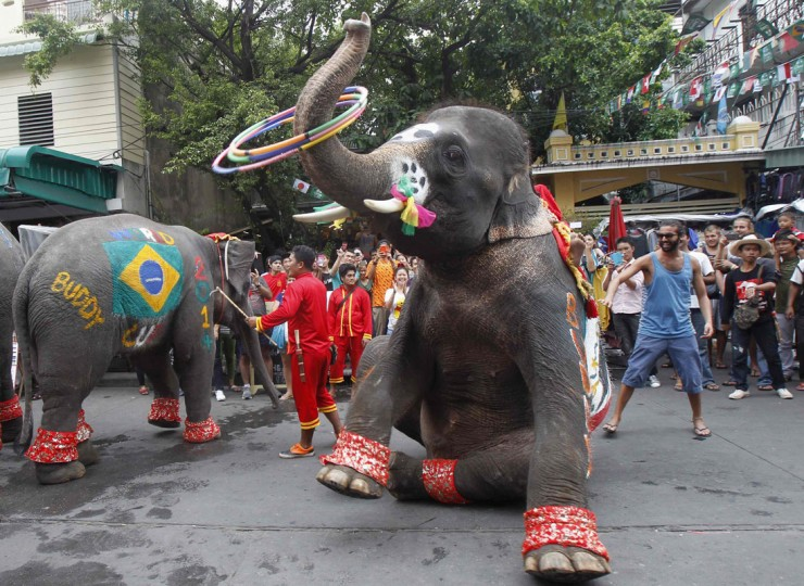 Elephants painted with flags of Brazil (L) and Mexico (R) perform to celebrate the 2014 World Cup in Brazil as hundreds of people watch along the Khaosan tourist street, in Bangkok June 13, 2014. The performance was part of an event arranged by the Khaosan Road business association in a bid to boost tourism under the current curfew, according to the association. REUTERS/Chaiwat Subprasom