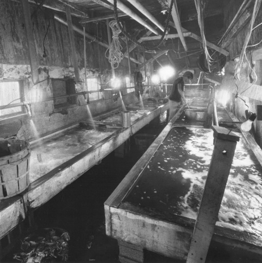 Danny Ward's peeler operation, a series of wooden tanks in which crabs moult. (George H. Cook, June 24, 2981, Sun photo)