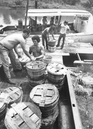 Waterman Bob Eurice left and young helpers unload baskets f crabs from his boat Miss Diane named after his wife at Bowley's Quarters dock. (Ralph L. Robinson, Aug. 11, 1976, Sun photo)