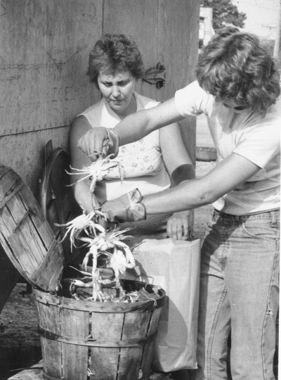 Matt Friesser loads up another bushel of Chesapeake Bay crabs while boss Diane Eurice watches. Her husband Bob, who crabs out of Bowle's Quarters area on Middle River says his territory like others is glutted with crabs this year. (Jed Kirschbaum, Aug. 10, 1979, Sun photo)