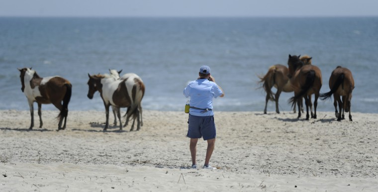 A visitor takes pictures of wild pony on a campground beach at Assateague National Seashore. (Barbara Haddock Taylor/Baltimore Sun)