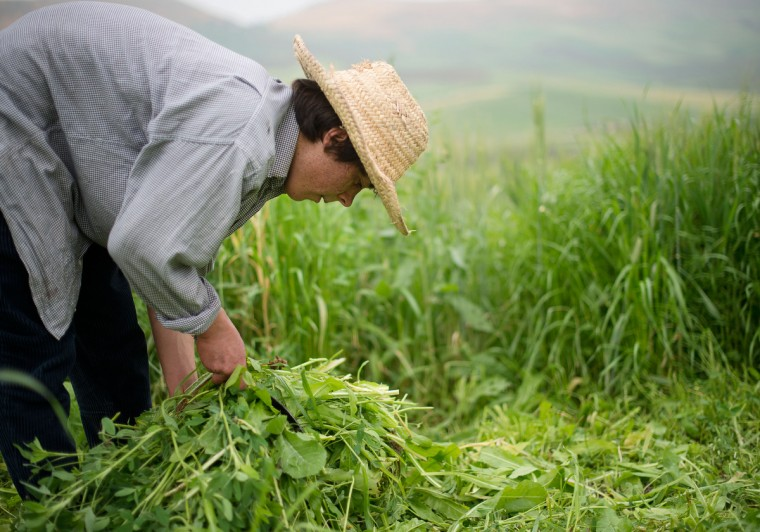 Mohamed El-Kotbi, 17, of the Province of Ouezzane, Morocco, cuts and piles up grass for his family's cows to eat. Rachel Woolf/Baltimore Sun