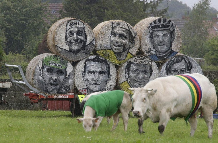 Cows, draped in the colours of the Tour de France cycling leaders jerseys, graze in a field near rolls of hay with the portraits of former champions along the route of the fifth stage of the Tour de France cycling race from Ypres in Belgium to Arenberg Porte du Hainaut in France, July 9, 2014. REUTERS/Jacky Naegelen