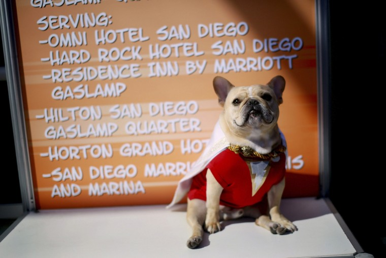 "Ollie the Pug, dressed in a ""Shazam"" costume, sits outside of the San Diego Convention Center during the 2014 Comic-Con International Convention in San Diego, California July 24, 2014. (Sandy Huffaker /Reuters)"