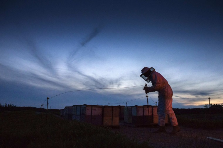 Beekeeper Robert Harvey crosses over a barricade as he works to transfer Italian honey bee colonies pollinating a blueberry field near Columbia Falls, Maine June 23, 2014. Over recent years, bees have been dying at a rate the U.S. government says is economically unsustainable. Honey bees pollinate plants that produce about a quarter of the food consumed by Americans, including apples, watermelons and beans. A lawsuit has now been filed by environmental groups in the United States seeking an injunction restricting the approval of a controversial class of pesticides known as neonicotinoids, or 'neonics'. These pesticides have become a subject of scrutiny in Europe and the U.S. as concern has mounted that they harm honeybees and other pollinators. Picture taken June 23, 2014. REUTERS/Adrees Latif