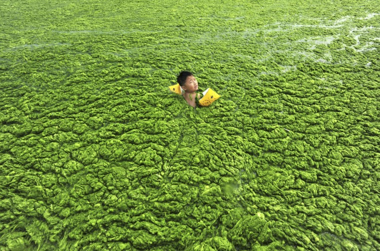 A boy swims in the algae-filled coastline of Qingdao, Shandong province July 15, 2011. (REUTERS/China Daily)