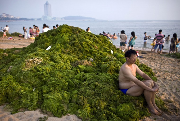 A man sits on a pile of algae as he rest after a swim at a bathing beach in Qingdao, Shandong province on July 7, 2008. (REUTERS/Nir Elias)