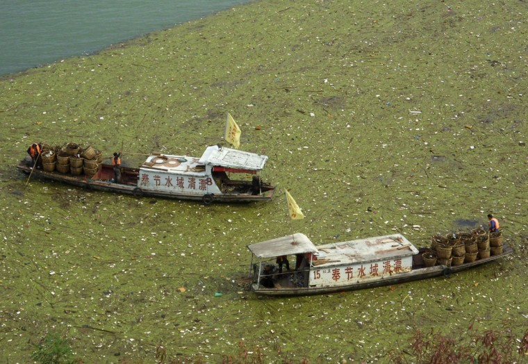 Workers clean up floating garbage on the Yangtze Rive near the Three Gorges reservoir in Fengjie County of China's Chongqing municipality, on November 1, 2009. (REUTERS/China Daily)