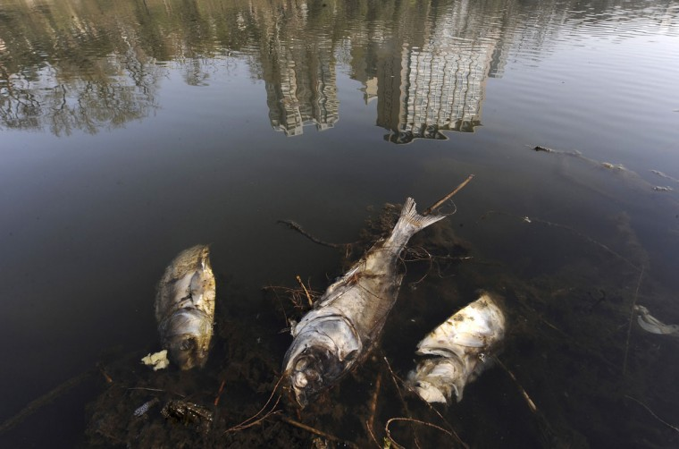 Dead fish are seen floating on a polluted river in Hefei, Anhui province March 19, 2010. (REUTERS/Stringer)