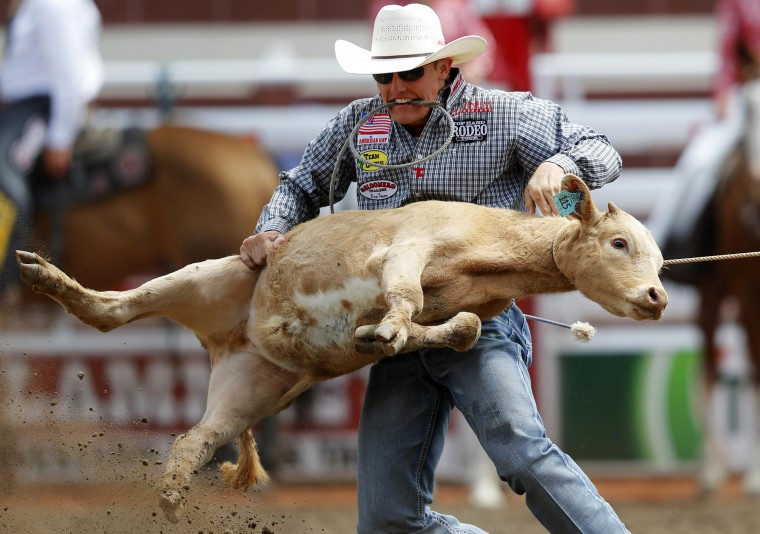 Tuf Cooper of Decatur, Texas, flips a calf in the tie-down roping event during day 1 of the rodeo at the 102 Calgary Stampede in Calgary, Alberta. (Todd Korol/Reuters)