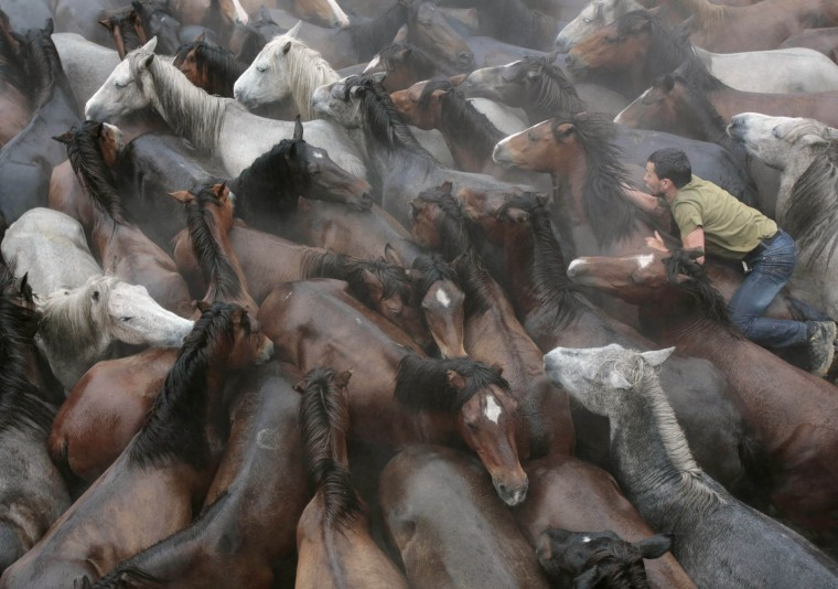 "A revelers tries to hold on to a wild horse during the ""Rapa Das Bestas"" traditional event in the Spanish northwestern village of Sabucedo. On the first weekend of the month of July, hundreds of wild horses are rounded up, trimmed and groomed in different villages in the Spanish northwestern region of Galicia. (Miguel Vidal/Reuters"
