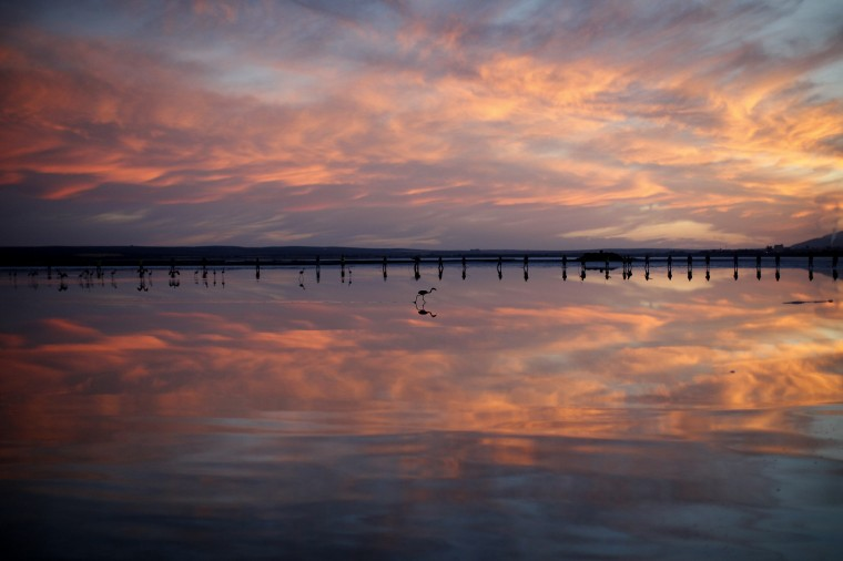 Volunteers wade across the lagoon at dawn to gather flamingo chicks and place them inside a corral at the Fuente de Piedra natural reserve, near Malaga, southern Spain. Around 600 flamingos were tagged and measured before being placed in the lagoon, one of the largest colonies of flamingos in Europe, according to authorities of the natural reserve. (Jon Nazca/Reuters)