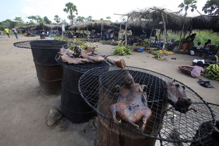 Dried bushmeat is displayed near a road of the Yamoussoukro highway March 29, 2014. Bushmeat - from bats to antelopes, squirrels, porcupines and monkeys - has long held pride of place on family menus in West and Central Africa, whether stewed, smoked or roasted. Experts who have studied the Ebola virus from its discovery in 1976 in Democratic Republic of Congo, then Zaire, say its suspected origin - what they call the reservoir host - is forest bats. Links have also been made to the carcasses of freshly slaughtered animals consumed as bushmeat. (REUTERS/Thierry Gouegnon)