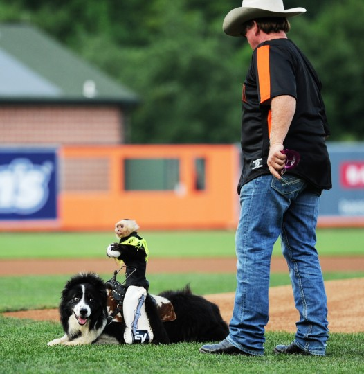 "Sam the monkey, sitting on Bob the dog, beside owner and trainer Tim Lepard, perpares to ""throw"" the first pitch at an Aberdeen Ironbirds game, Thursday, July 10, 2014. (Jon Sham/BSMG)"