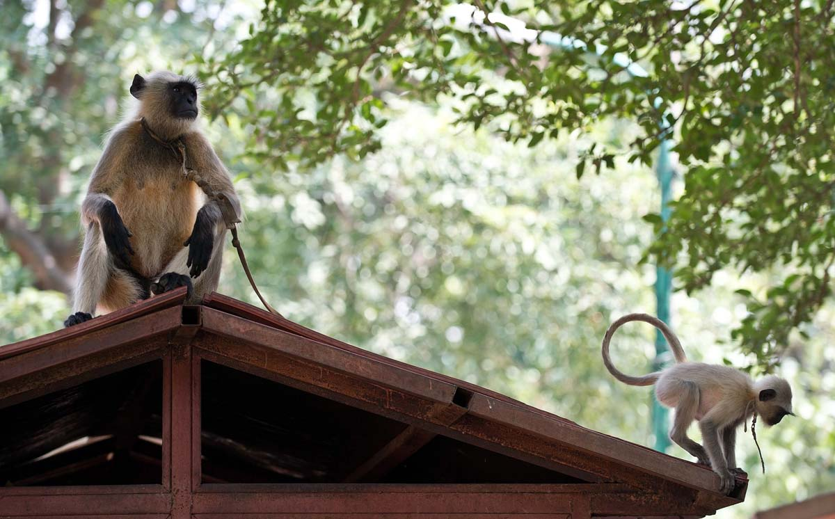 An old alter revived, bodies in Brno, monkeys guarding the government | August 1