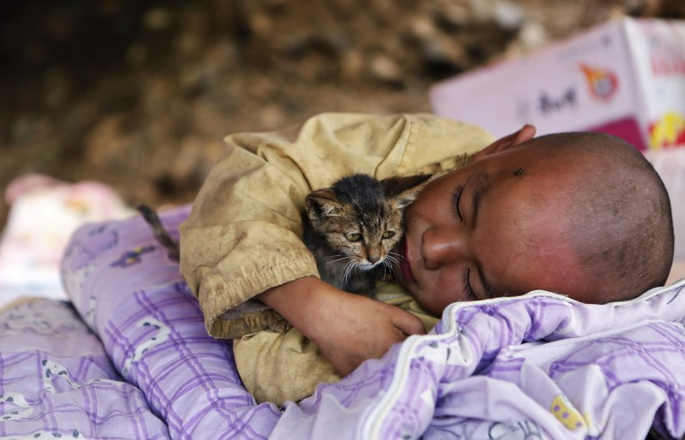 A child, cuddling a cat, rests under a shelter at the earthquake zone in Ludian county, Zhaotong, Yunnan province, August 5, 2014. An earthquake in China on the weekend triggered landslides that have blocked rivers and created rapidly growing bodies of water that could unleash more destruction on survivors of the disaster that killed 410 people, state media reported on Tuesday. (Reuters)