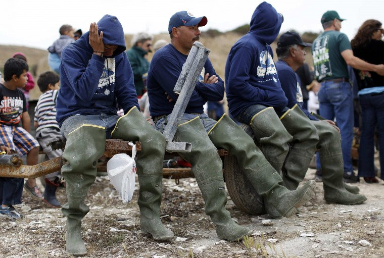 Workers listen to speakers during a celebration event at Drakes Bay Oyster Company in Inverness, California July 31, 2014. (Stephen Lam/Reuters)