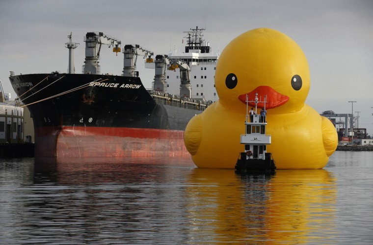 A giant inflatable rubber duck installation by Dutch artist Florentijn Hofman floats through the Port of Los Angeles as part of the Tall Ships Festival, in San Pedro, California. The creation, which is five stories tall and five stories wide, has been seen floating in various cities around the world since 2007. (Lucy Nicholson/Reuters)