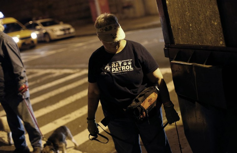 Judy stands by as her Border Terrier Merlin searches for rats during an organized rat hunt on New York City's Lower East Side July 25, 2014. The Ryders Alley Trencher-fed Society (R.A.T.S.) is a group of enthusiasts who take their dogs out to hunt rats in New York City. Members of the independent group venture out on night-time excursions to allow their dogs to do what they do best: hunt and kill vermin. (Mike Segar/Reuters)