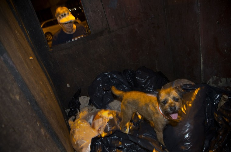 Merlin, a Border Terrier, hunts for rats in a dumpster as his owner Judy looks on, during an organized rat hunt on New York's Lower East Side July 25, 2014. The Ryders Alley Trencher-fed Society (R.A.T.S.) is a group of enthusiasts who take their dogs out to hunt rats in New York City. Members of the independent group venture out on night-time excursions to allow their dogs to do what they do best: hunt and kill vermin. (Mike Segar/Reuters)