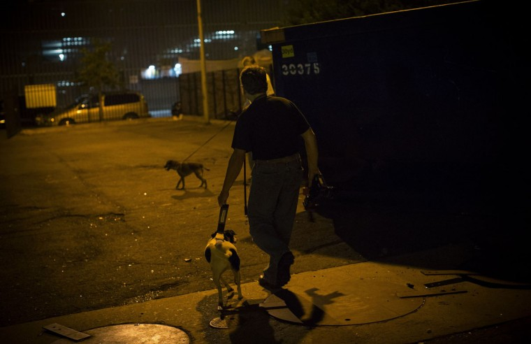 Bill leads his dog Paco, a Feist Terrier, though a vacant lot near trash dumpsters during an organized rat hunt on New York City's Lower East Side July 25, 2014. The Ryders Alley Trencher-fed Society (R.A.T.S.) is a group of enthusiasts who take their dogs out to hunt rats in New York City. Members of the independent group venture out on night-time excursions to allow their dogs to do what they do best: hunt and kill vermin. (Mike Segar/Reuters)
