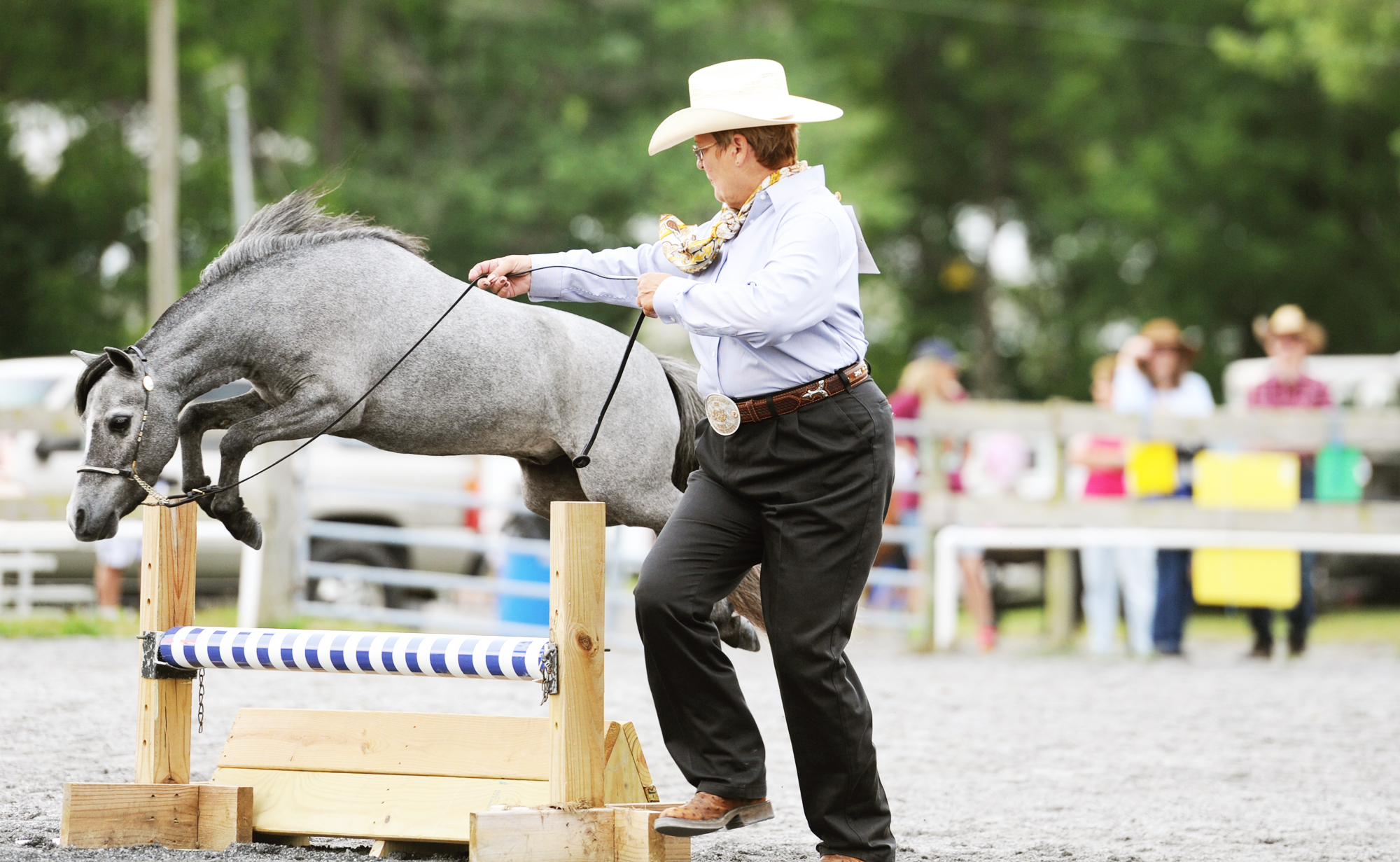 Tiny steeds, big deeds at the Howard County Fair Miniature Horse Show