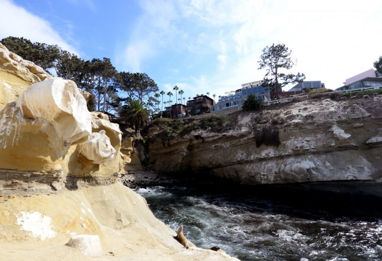 A wide shot shows a cliff on La Jolla where sea lions and birds come to soak in the sun.