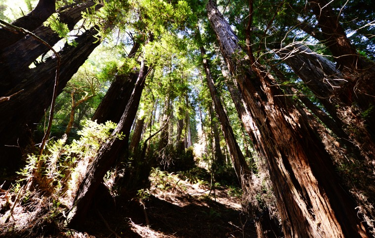 If you're like me, you heard about redwood trees your whole life. But there's a big difference between hearing about one and seeing one in the bark. This is from Muir Woods, just over the Golden Gate Bridge from San Francisco.