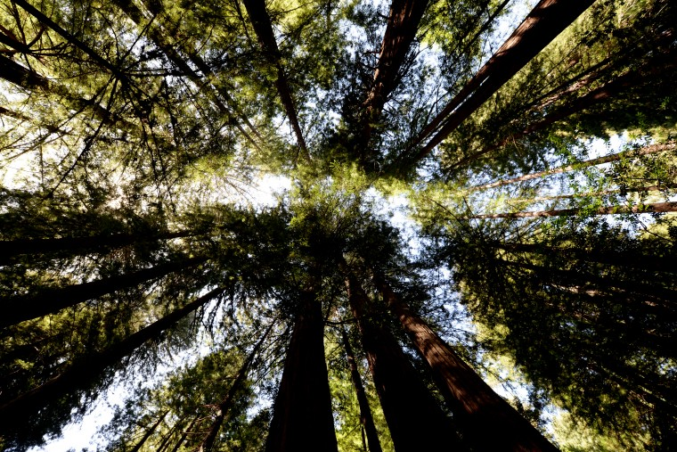 My neck began to hurt from looking up at and photographing the trees so much, but it was hard to not be in awe.