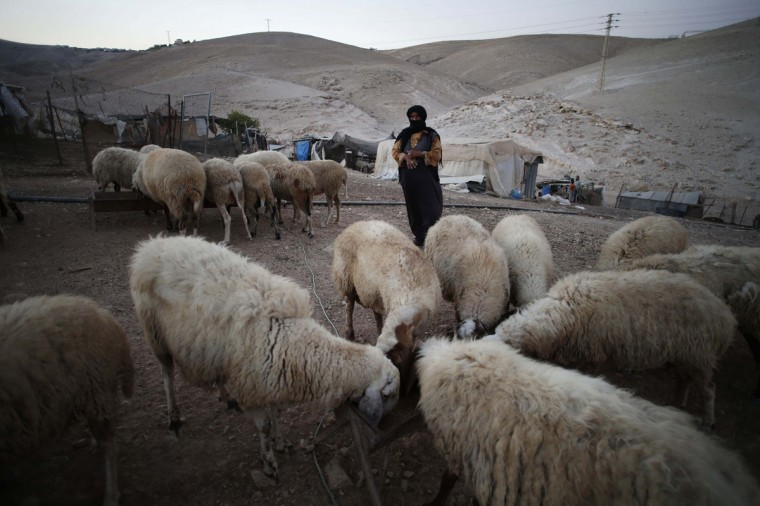 A Palestinian Bedouin woman stands next to her sheep in the West Bank village of Al-Eizariya, near east of Jerusalem September 18. 2014. As part of a plan to remove them from Area C that is under both Israel's civilian and military aegis, the Israeli Civil Administration is expected to start evicting Bedouins in the West Bank from lands they have been living on for decades. The first measure to be taken is relocating nearly 2,400 Bedouins living in an area east of Jerusalem to expand the settlement of Ma'aleh Adumim and other settlements, according to Israeli local media. (Ammar Awad/Reuters)