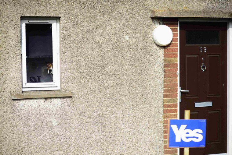"""A dog peers out of a window inside a house with a """"Yes"""" poster as Scotland's First Minister Alex Salmond (unseen) canvasses in Dyce, Aberdeen, northern Scotland September 12. The referendum on Scottish independence will take place on September 18, when Scotland will vote whether or not to end the 307-year-old union with the rest of the United Kingdom. 