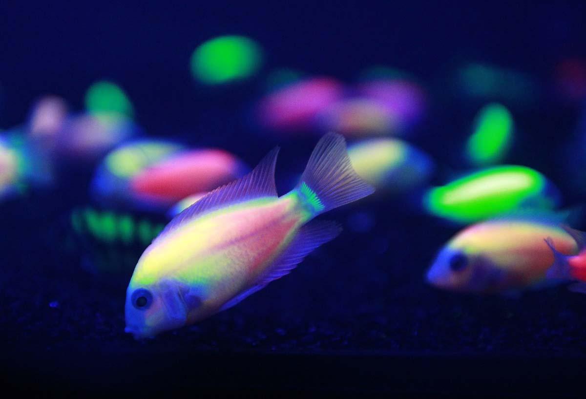 Flooding in Pakistan, a Pistorius verdict, fish of a different color | Sept. 12