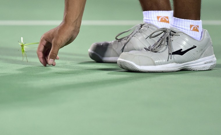 A ball boy tries to catch a grasshopper on the court during a break in the quarter-final match between Caroline Wozniacki of Denmark and Timea Bacsinszky of Switzerland at the Wuhan Open tennis tournament in Wuhan, Hubei province, September 25, 2014. (REUTERS/China Daily)