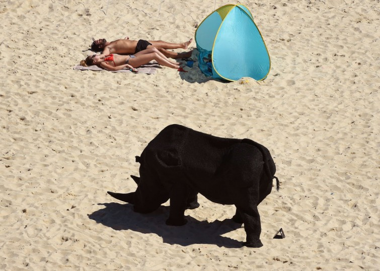 "A couple sunbath near a sculpture by Australian artist Mikaela Castledine, titled ""Gift of the rhinoceros"" on Sydney's Tamarama Beach as artists from 16 countries prepare their works for the upcoming Sculpture by the Sea exhibition, on October 23, 2014. (William West/AFP/Getty Images)"