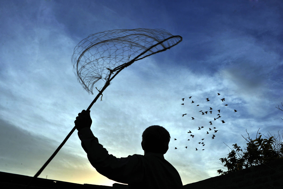 Virtual reality, corralling pigeons, air strike on Turkish border | Oct. 23