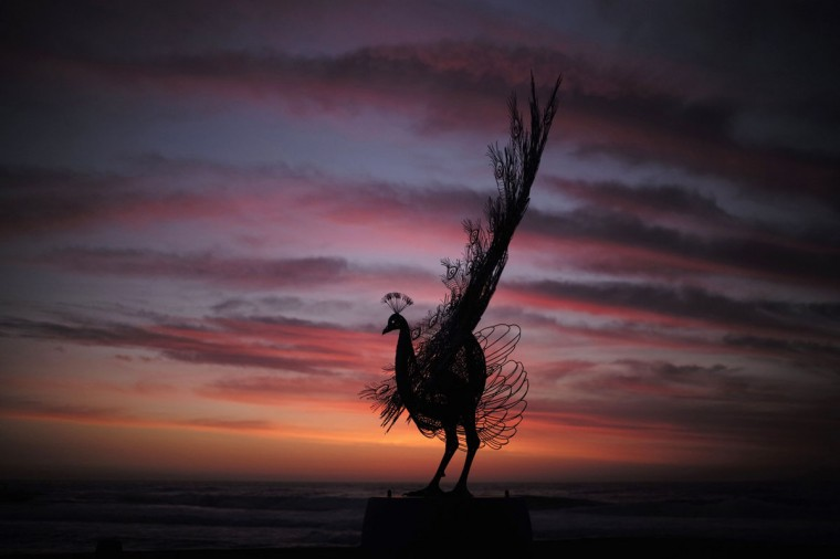 "A peacock sculpture by Byeong Doo-moon titled 'Our memory in your place' is shown before sunrise as part of the ""Sculpture by the Sea"" exhibition at Sydney's Tamarama Beach on its opening day October 23, 2014. (Jason Reed/Reuters)"