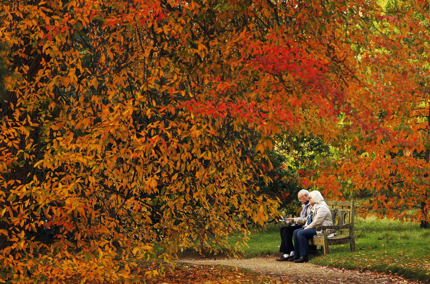 A couple sits under trees in autumn colour at Sheffield Park Garden ...