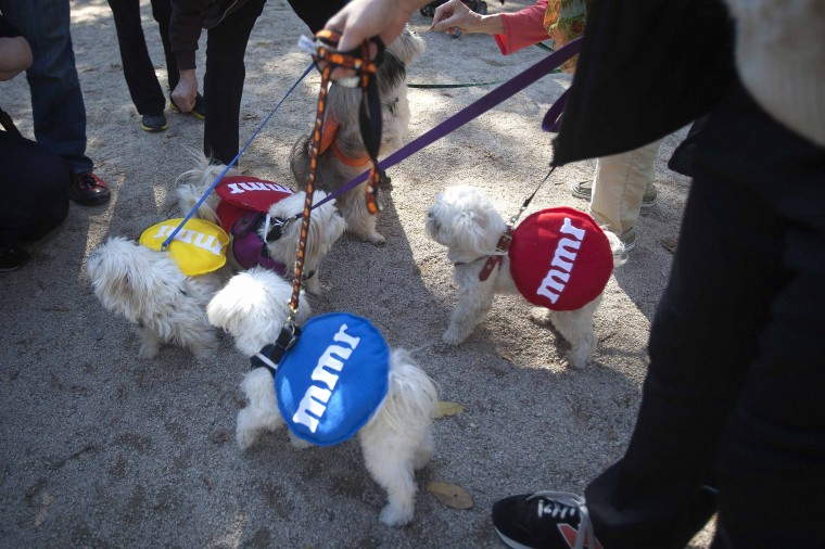 A group of dogs play during the 24th Annual Tompkins Square Halloween Dog Parade in New York. Hundreds of dog owners dress their dogs and compete for fun and prizes during the parade. (Carlo Allegri/Reuters)
