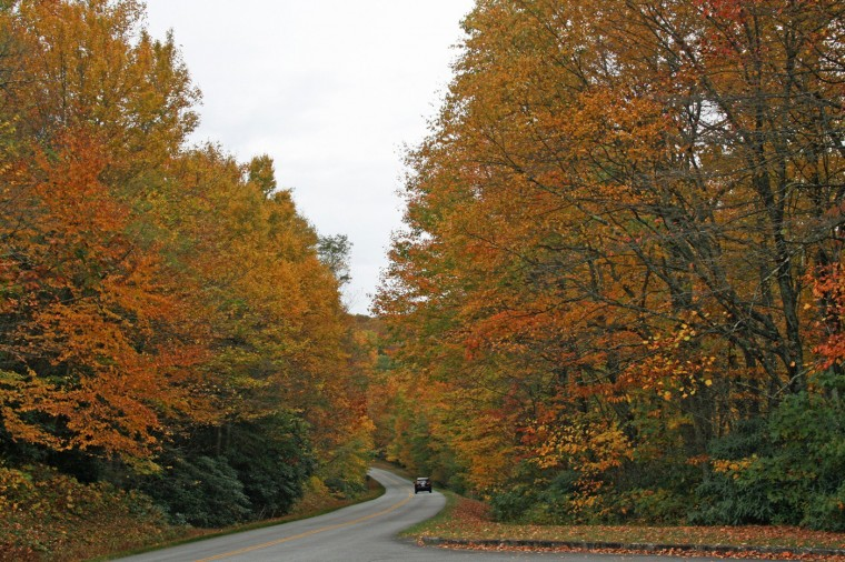 Fall color on the Blue Ridge Parkway. (Marjie Lambert/Miami Herald/MCT)