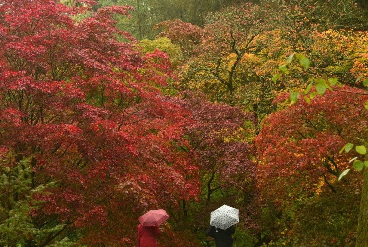 Visitors view the autumn foliage of acer trees in the Old Arboretum at Westonbirt in south west England October 14, 2014. The Japanese maples are some of the first species to turn red and orange at this famous tree collection, originally planted out in the nineteenth century Victorian heyday of plant hunting. (Toby Melville/Reuters)