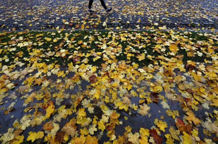 A visitor walks along a sidewalk covered with yellow leaves at the Peter and Paul Fortress in St. Petersburg, October 14, 2014. (Alexander Demianchuk/Reuters)