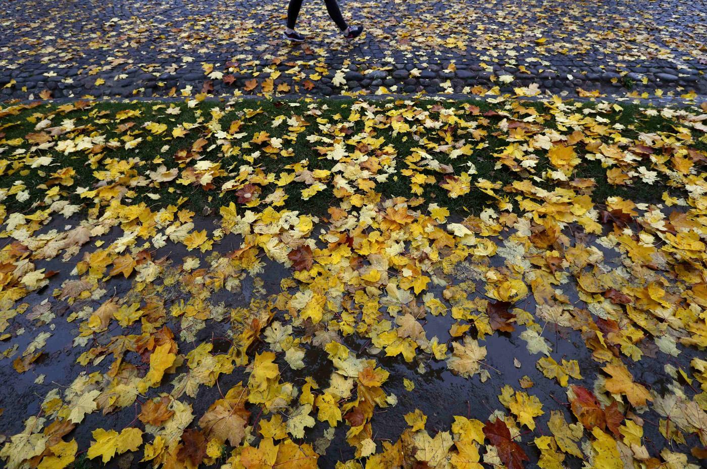 Fall foliage: Mother Nature's autumn show