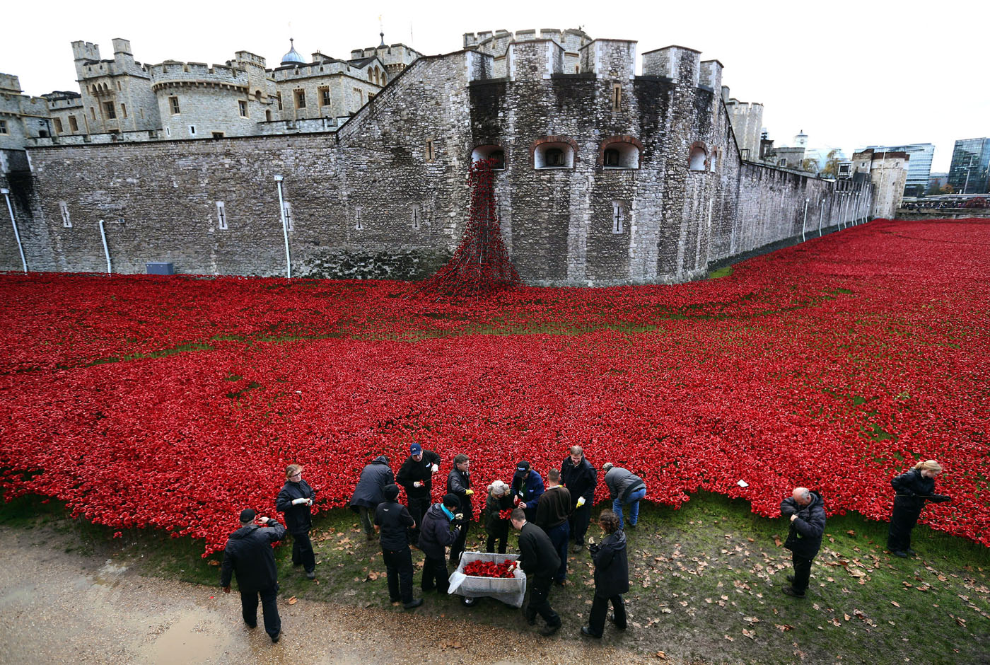 Workers remove 888,245 poppies from the Tower of London by hand