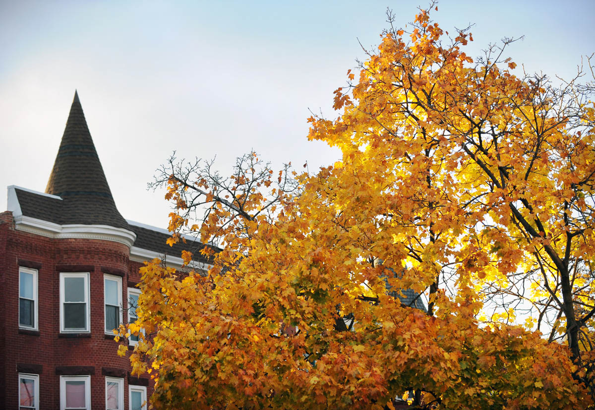 Fall foliage brightens city