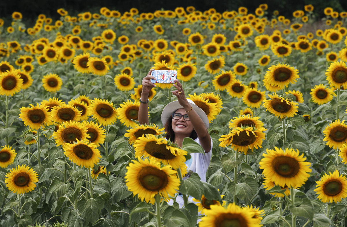 Sunflower selfie, New York City Marathon, All Souls Day, London to Brighton Veteran Car Run | Nov. 2