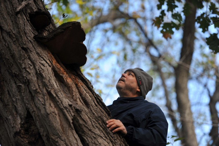 Fred Paraskevoudakis, Finksburg, a microbiology professor at Baltimore City Community College and president of the Maryland Entomological Society, takes a closer look at Phellinus linteus, a mushroom growing on a black locust tree. The Natural History Society of Maryland has a meetup lead by biologist Nick Spero searching for mushrooms in Herring Run Park. (Kim Hairston/Baltimore Sun)