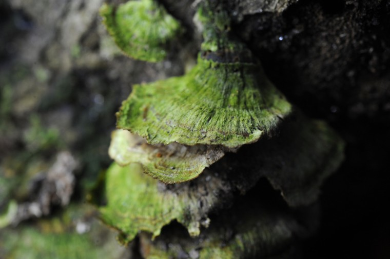 Moss covers wild mushrooms in Herring Run Park. (Kim Hairston/Baltimore Sun)