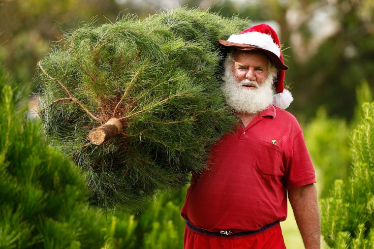 A man dressed as Santa Claus helps families choose their own trees at Sydney Christmas Tree Farm at Duffy's Forest on December 13, 2014 in Sydney, Australia. People avidly select their chosen tree from over 4,000 available before cutting it down and transporting it back to their home in time for Christmas festivities. (Brendon Thorne/Getty Images)