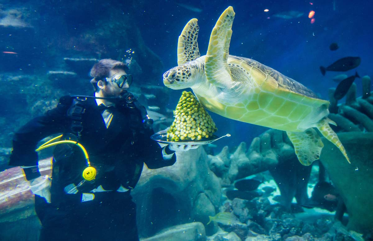 Giant Christmas ball, Sydney hostages released, brussels sprout-loving sea turtle| Dec. 15