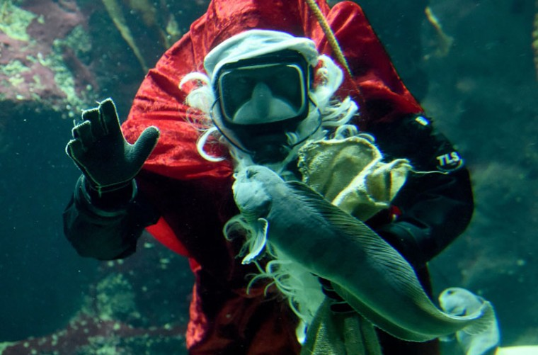 A keeper dressed as Santa Claus waves from an aquarium on December 4, 2014 in Tonning, Germany. (Carsten Rehder/AFP/Getty Images)